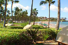 Condos in Elua Wailea Maui